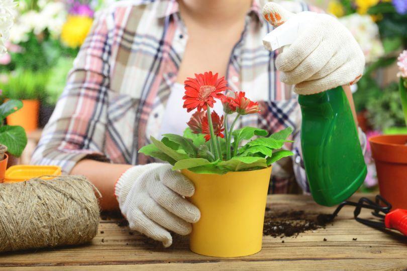 Эпин - регулятор роста для комнатных растений