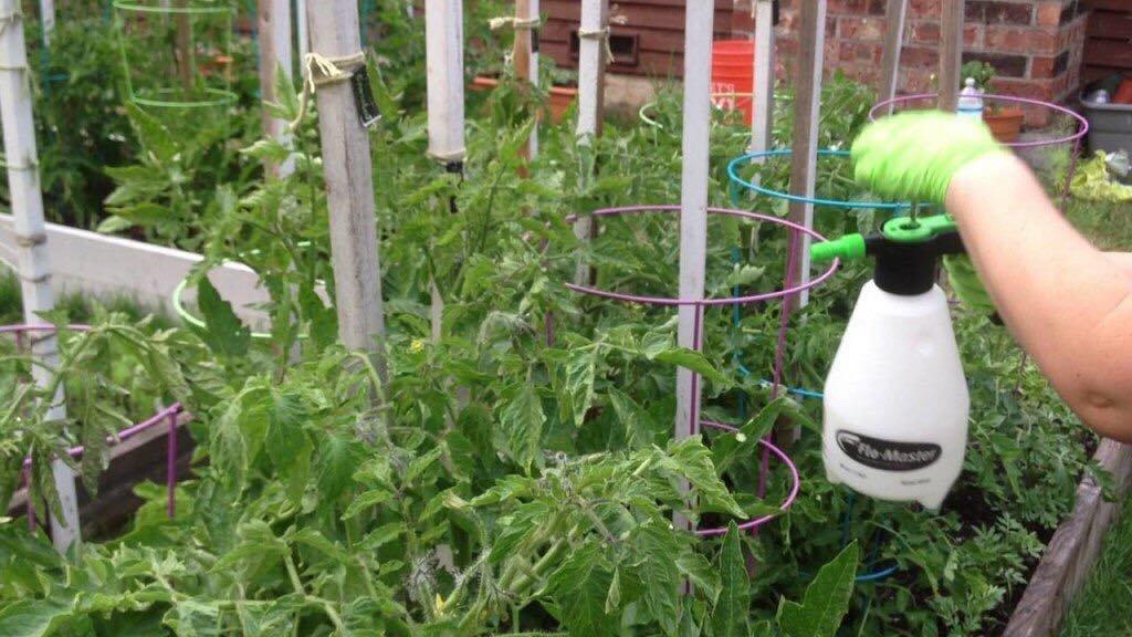 Суперфосфат на огороде – польза и инструкция по применению