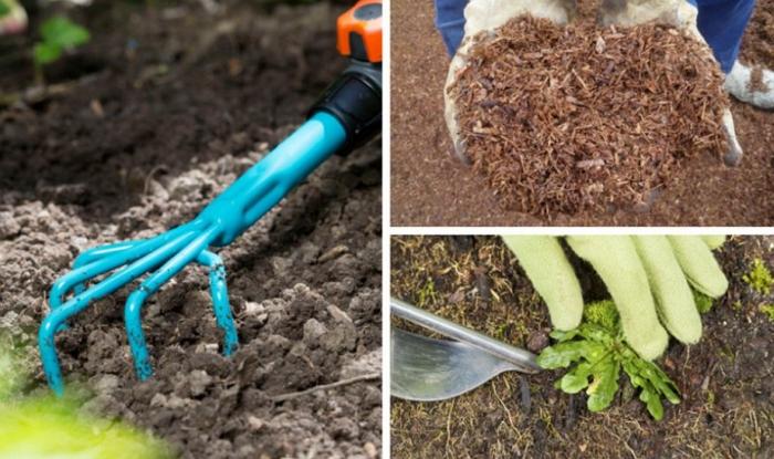 Пихта Нордмана – стильное решение для вашего сада