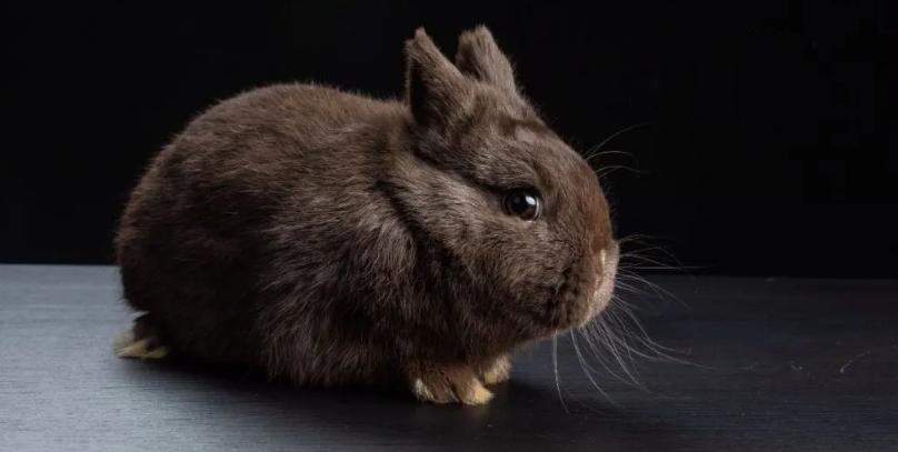 Породы кроликов с черным мехом