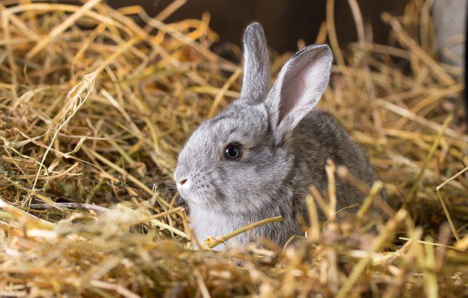 Карликовые кролики – мимиметр зашкаливает!