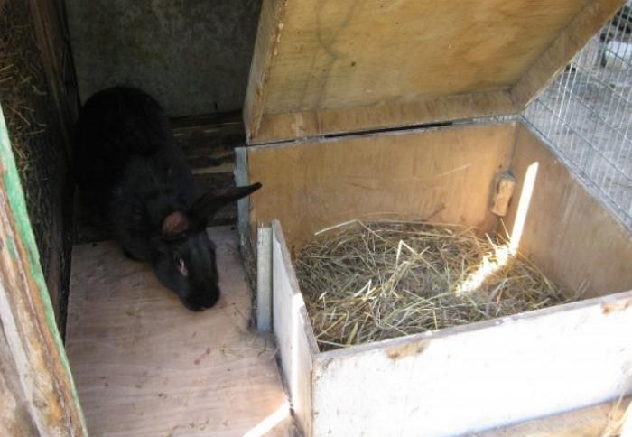 Обустройство жилья для кроликов: клетка и маточник