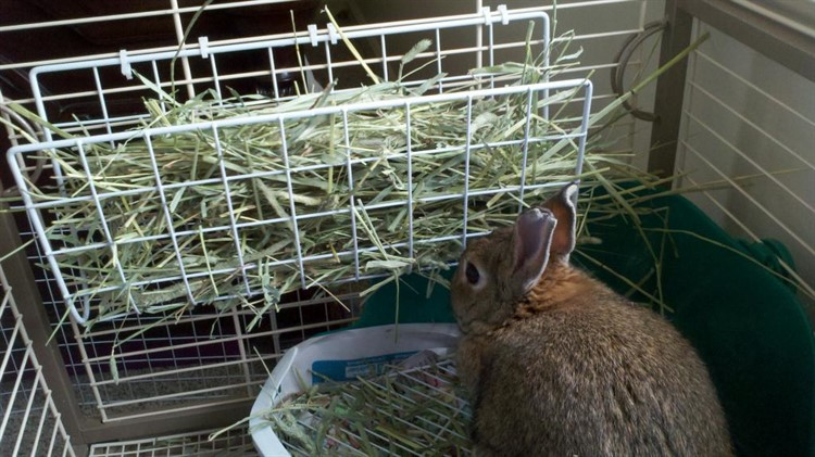 Ясельная кормушка для сена