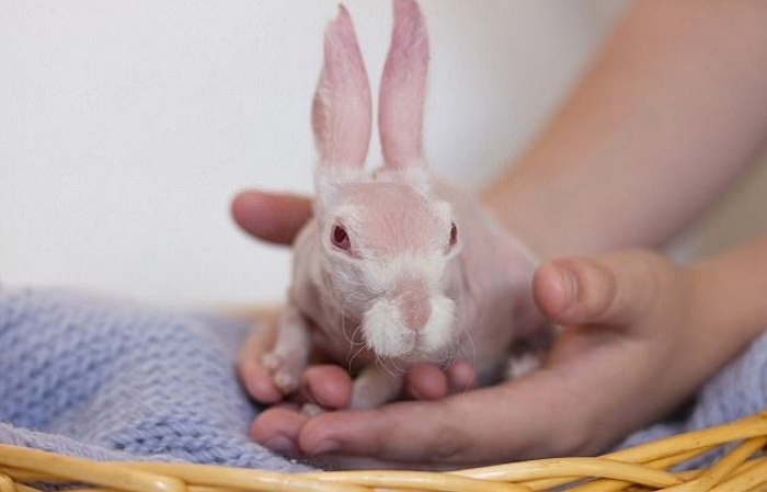 Декоративные кролики – любимые домашние питомцы!