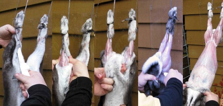 Снятие шкуры с кролика