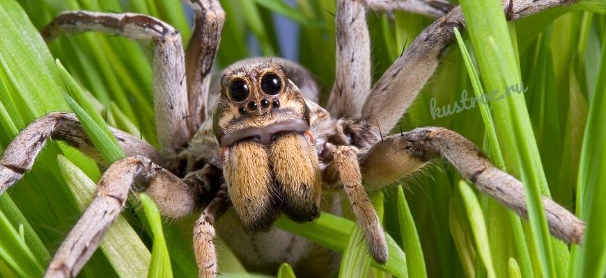Пауки виды