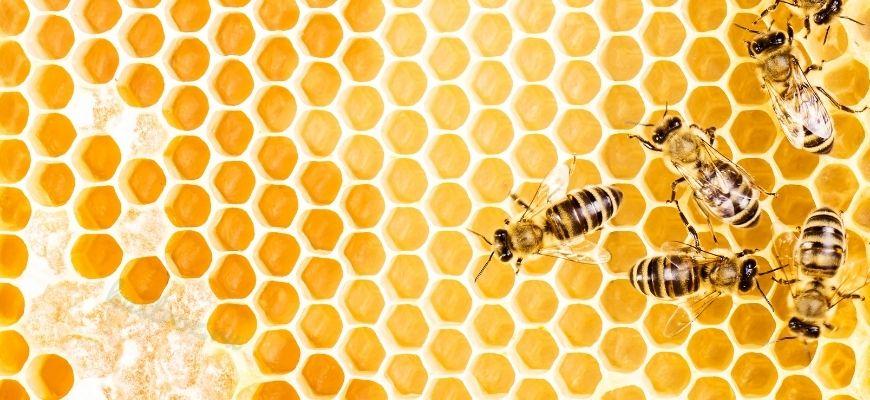 Пчелы – маленькие труженицы большого мира