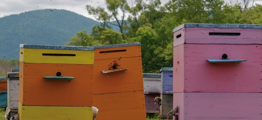 Пчеловодство – с чего начать новичку