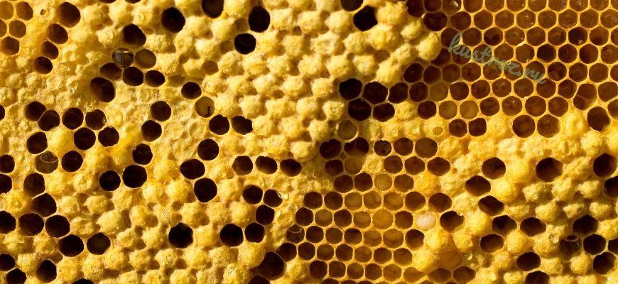 Использование пчелиной перги для оздоровления