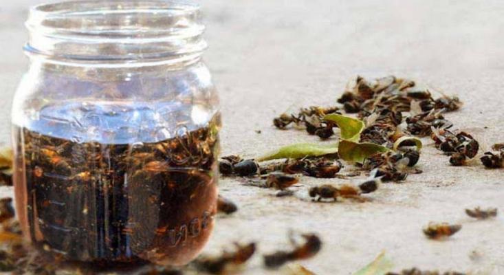 Целебный пчелиный подмор – ценный продукт