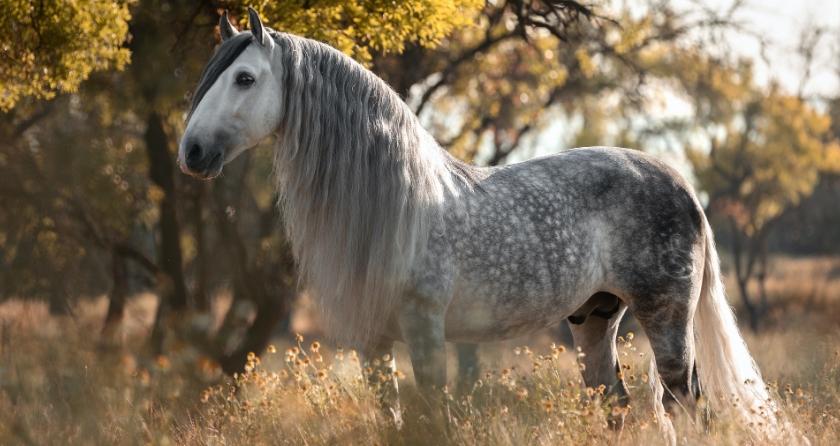 Содержание андалузских лошадей