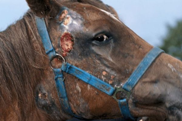 Как распознать болезнь у лошадей
