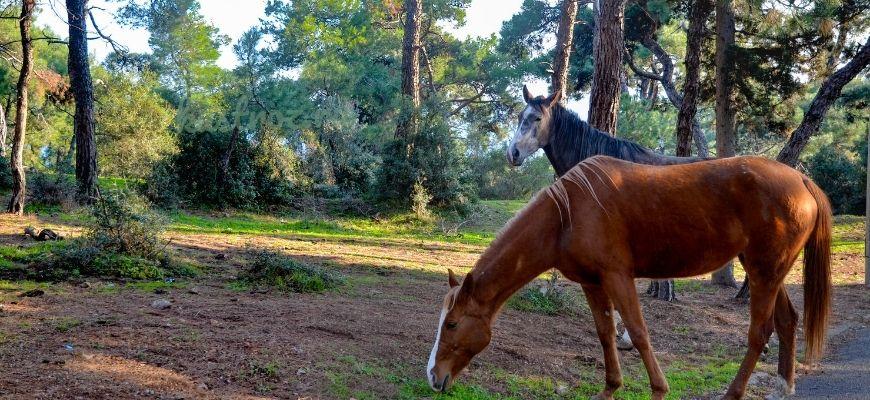 Буденновская порода лошадей – русская спортивная гордость!