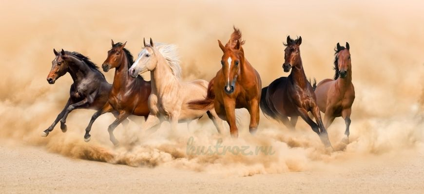ТОП 10 FAQ о лошадях