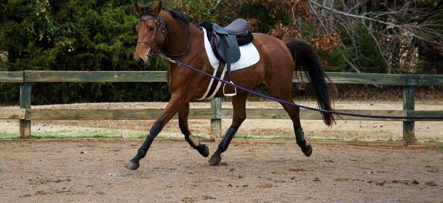 Ганноверская лошадь с седлом