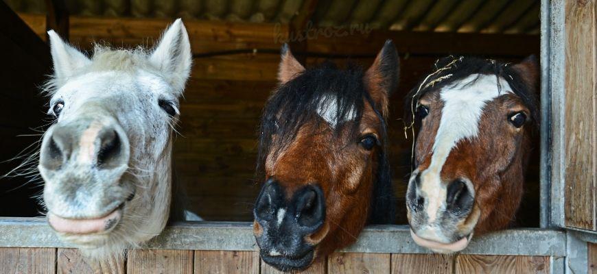 Клички лошадей