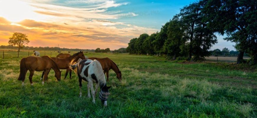 Самые красивые клички лошадей