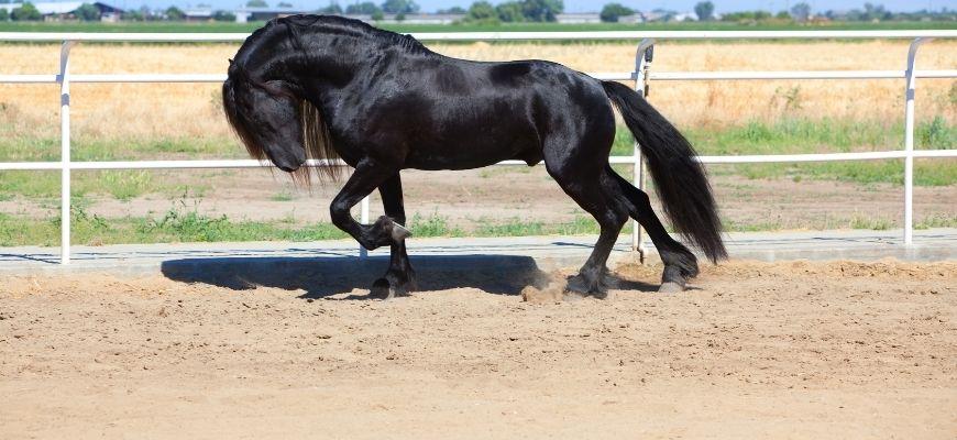 Имя для лошади