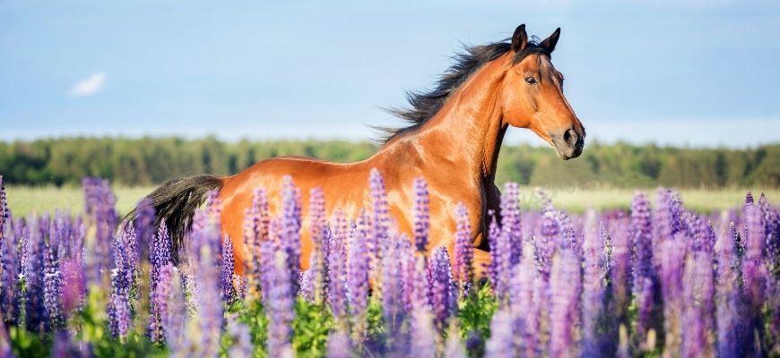 Красивая кличка для лошади