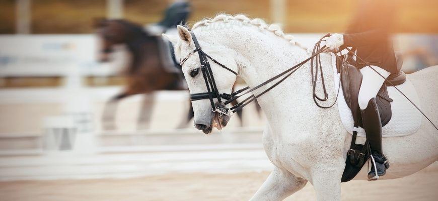 Кличка для спортивной лошади