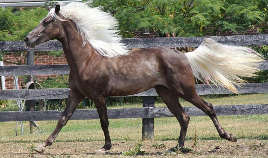 Самые знаменитые породы лошадей в мире!