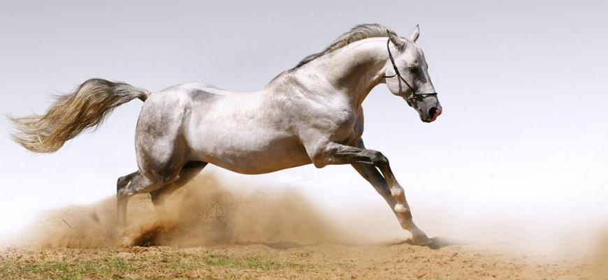 Мустанг лошадь