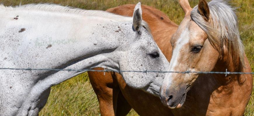 Как случают лошадей