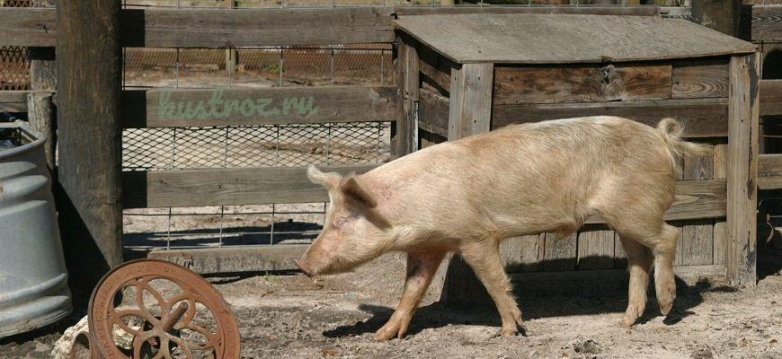 Как сделать свинарник самостоятельно