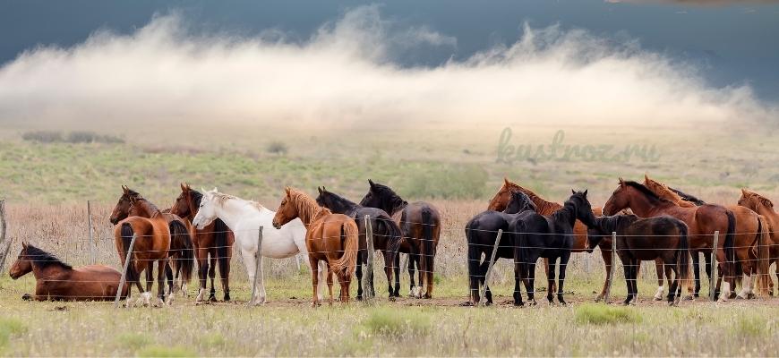 Трекененская порода лошадей