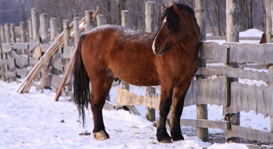 содержание вятских лошадей