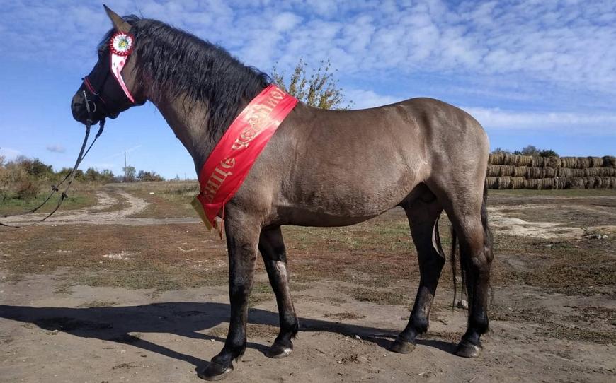 Вятка – старинная русская порода лошадей